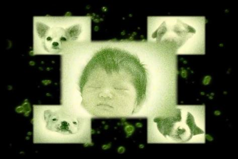 Mezame No Hakobune Open Your Mind Ku-Nu Dog Being Remembrance of Seedling Baby Puppies